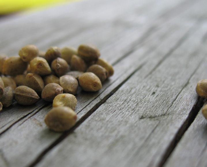 Superfood Spotlight: Hemp Seeds