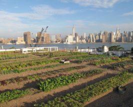 Urban Farms: Rooftop Edible Gardens In NYC