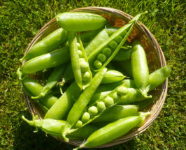 Pure Spring: Fresh English Peas with Goat Cheese