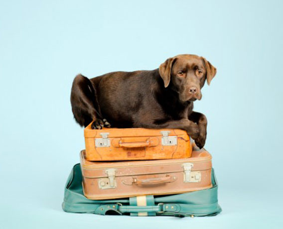 Outward Bound Hound: Traveling With Pets