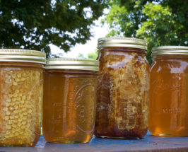 Superfood Spotlight: Manuka Honey