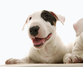 5 Homeopathic Remedies For Your Pet