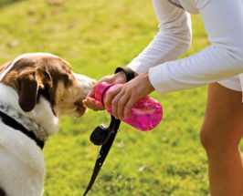 12 Rules For Keeping Your Cool at the Dog Park