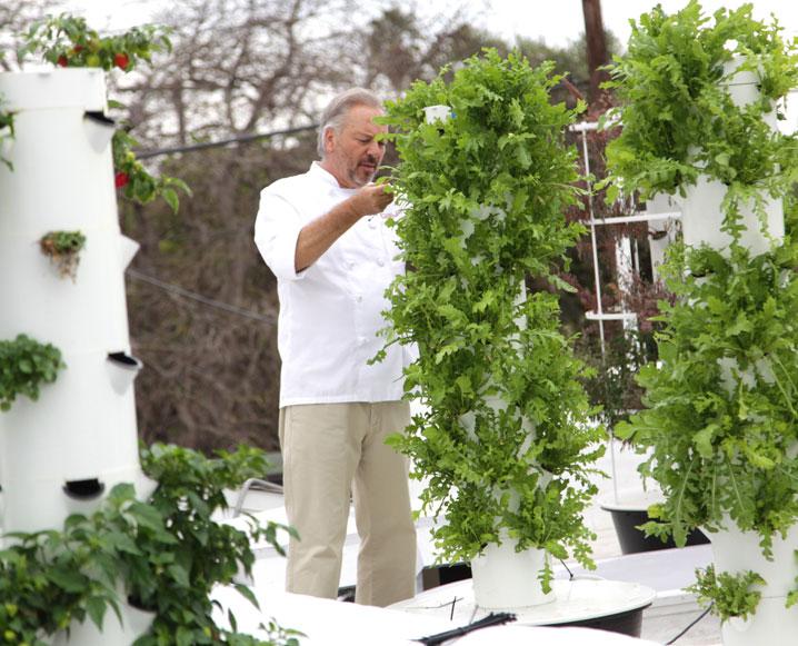 Cielo Verde At Playa: An LA Restaurant's Edible Rooftop Garden