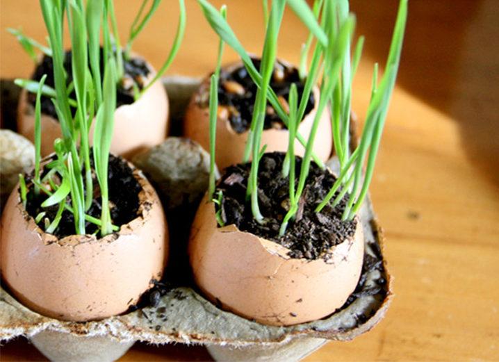 Superfood Spotlight: Wheatgrass