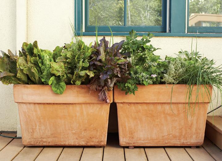 Cuttings From The Beautiful Edible Garden