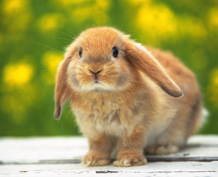 Advice From The Pros On Shopping Cruelty-Free