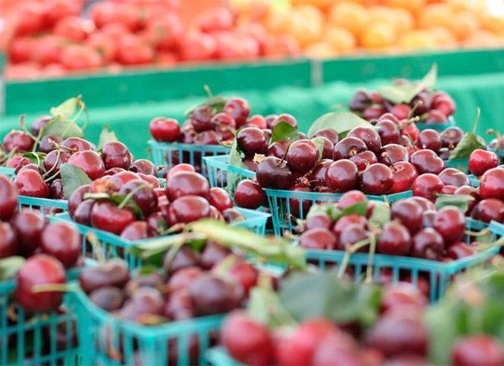 Superfood Spotlight: Bing Cherries
