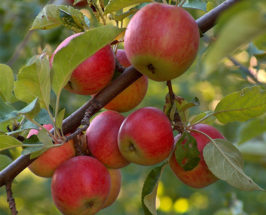 Best Of Season: 7 Beauty Foods To Eat This Fall