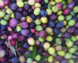 Extra Virgin: Our First Time To The Paso Robles Olive Festival