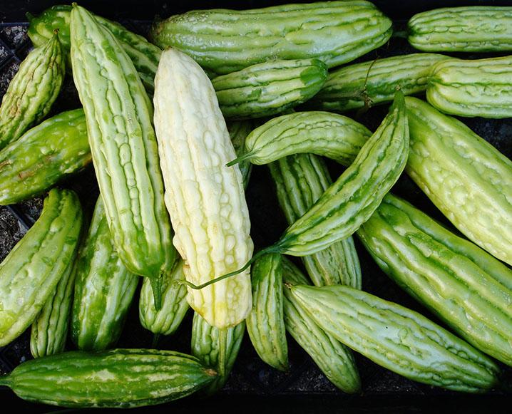 bitter melon extract benefits