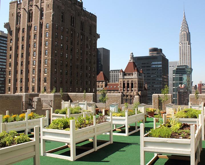 Urban Apiary: The Waldorf-Astoria's Edible Rooftop Garden