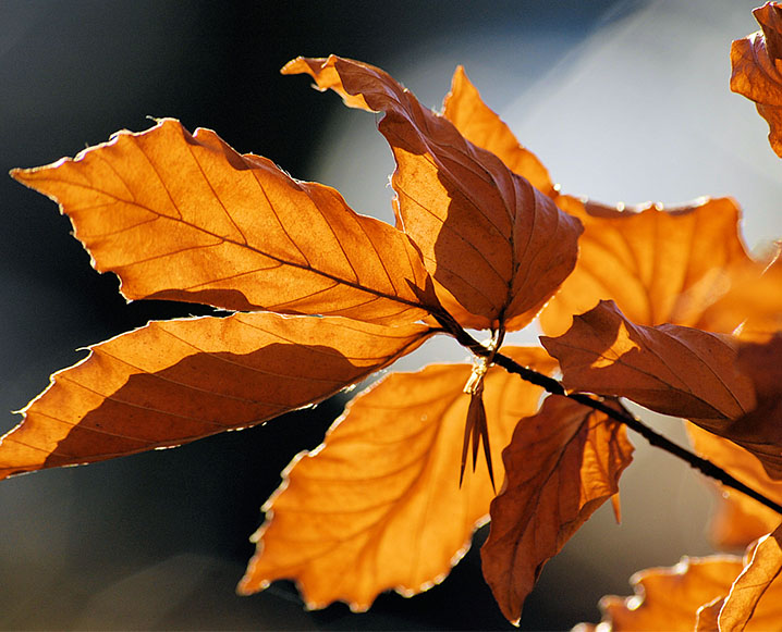 Seasonal Wellbeing: Finding Balance For The Fall