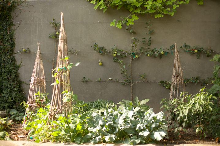 Coco's family garden