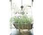 Medium shot of a clawfoot bathtub growing a big, overflowing plant inside