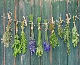 cleansing herbs at every meal tips