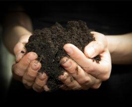 diy composting honest co