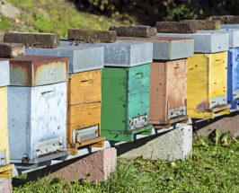 superfood spotlight bee propolis benefits