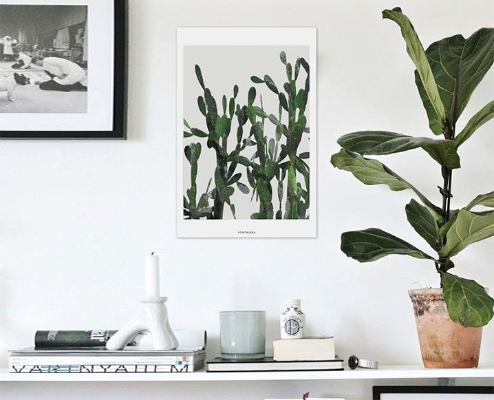 Tips For Growing Fiddle Leaf Figs + How To Style Them