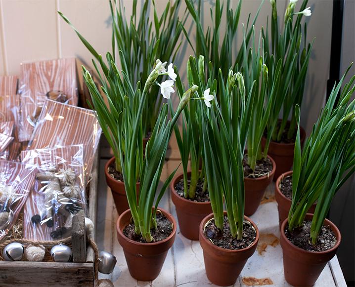 Feng Shui Florals: 9 Flower Arrangements That Have Meaning