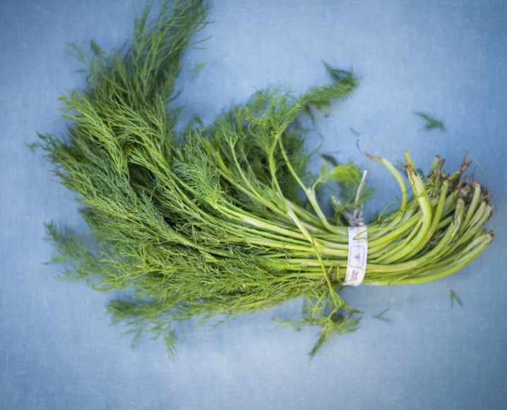 Bunch of fresh dill on a blue background