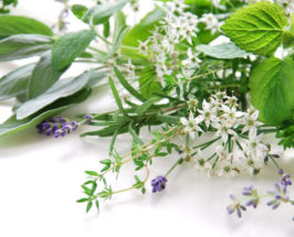 These 10 Common Herbs Are More Powerful Than You Think