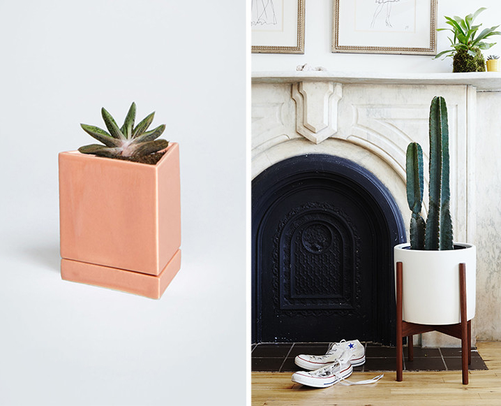 Please Send Plants: Inside This Cute New NYC Plant Delivery Service