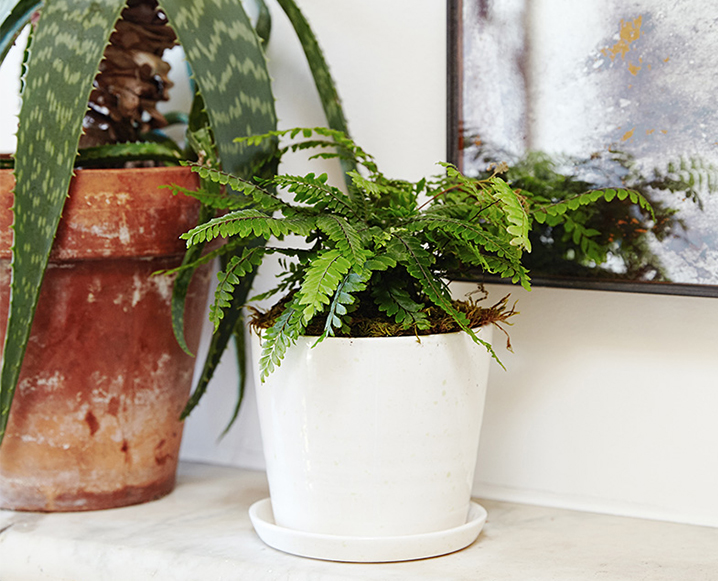 air-purifying plants