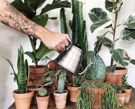 Stop killing your houseplants care tips