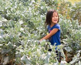 thao family farm interview
