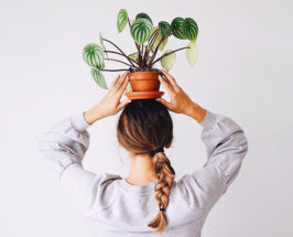 best plants to keep in your bedroom for better quality sleep