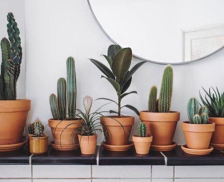 best plants to keep in your bedroom better sleep tips