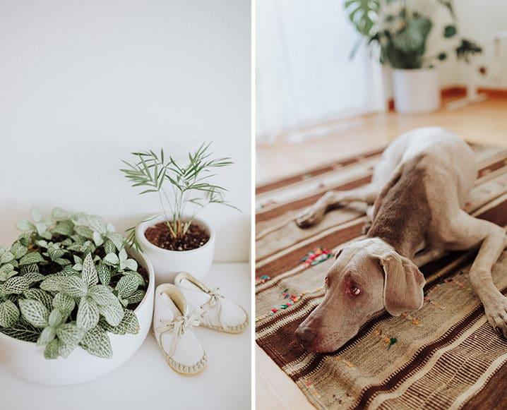 Eco-Friendly Nursery plant and dog
