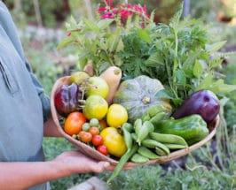 wellness trends healthy basket of fresh vegetables