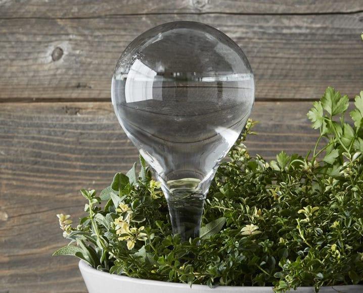 garden watering bulb
