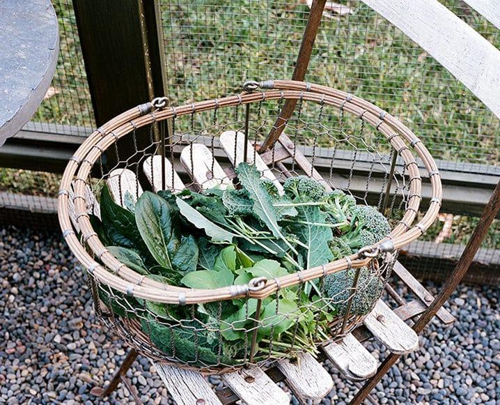 fresh greens in garden basket