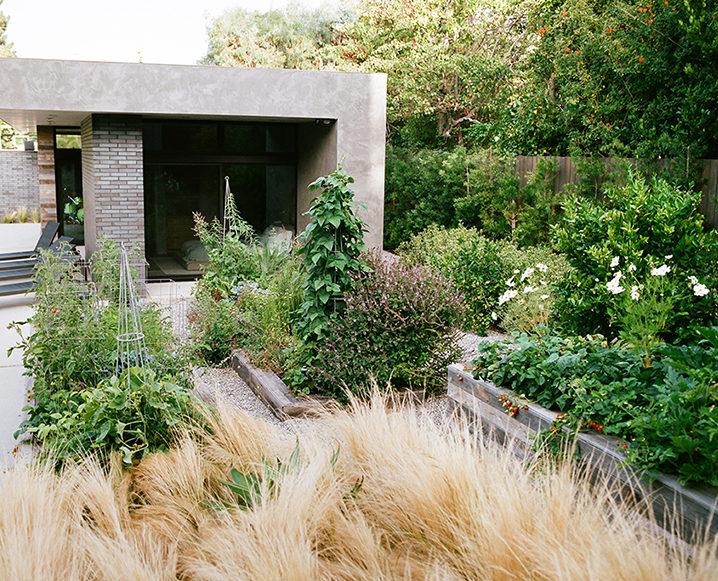 edible gardens brentwood
