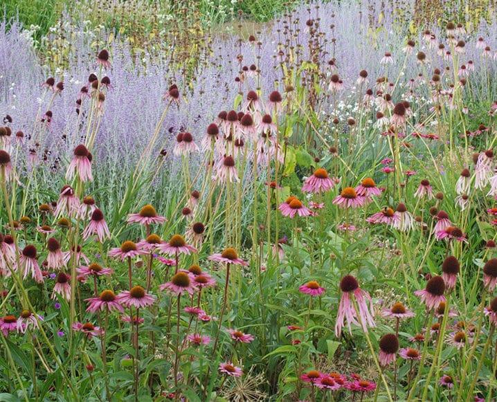 Medicinal Flower Garden Draft from Dr. Stacie J. Stephenson