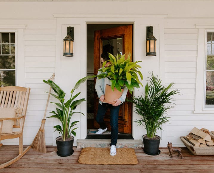 summer house plants on doorstep