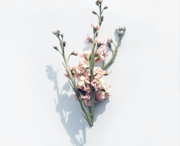 wellnes in 30x shadowy florals