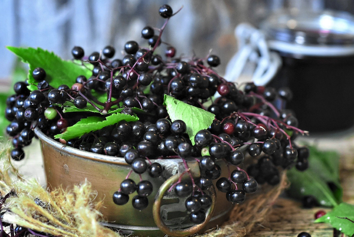 medicinal elderberries